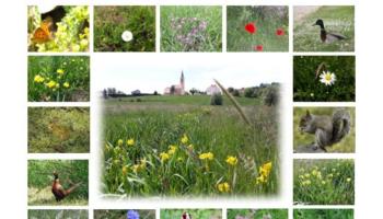 """""""Bioraznolikost u centru našeg grada"""""""